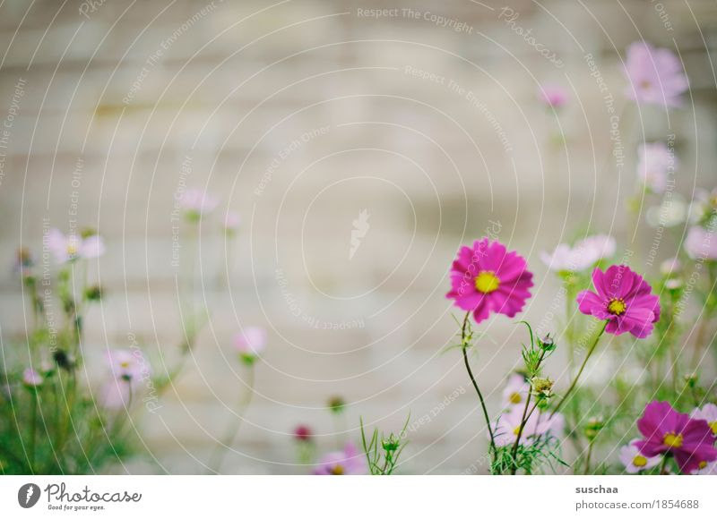 Nature Plant Summer Town Flower Blossom Wall (barrier) City life Garden Bed (Horticulture) Wild plant