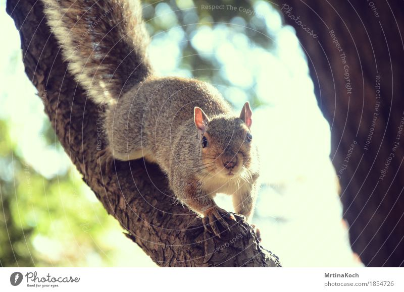 Nature Tree Animal Forest Park Wild animal Cute Soft Curiosity Surprise Zoo Bay (horse) Timidity Squirrel Rodent Bushy