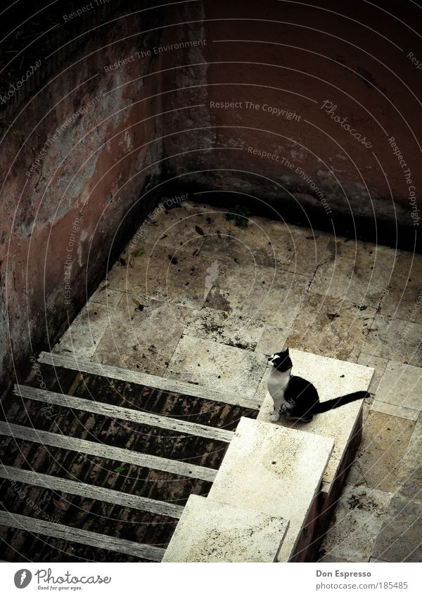 Loneliness Animal Wall (building) Jump Wall (barrier) Cat Room Wait Flat (apartment) Sit Stairs Esthetic Gloomy Broken Observe Longing