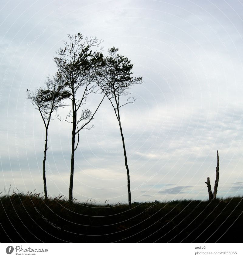 Sky Nature Plant Tree Landscape Clouds Environment Grass Together Horizon Growth Stand Beautiful weather Twig Thin Tree stump