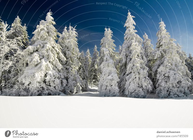 Nature White Tree Blue Winter Vacation & Travel Calm Forest Snow Mountain Ice Weather Frost Tourism Copy Space Pure