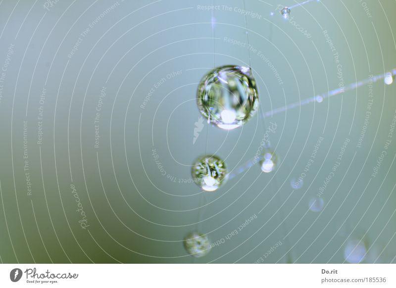 Drops for ti.Na Water Autumn Rain Fluid Spider's web cobweb pearls Colour photo Subdued colour Exterior shot Copy Space left Flash photo Light