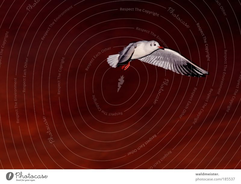 Bird Flying Esthetic Wild animal Animal Seagull