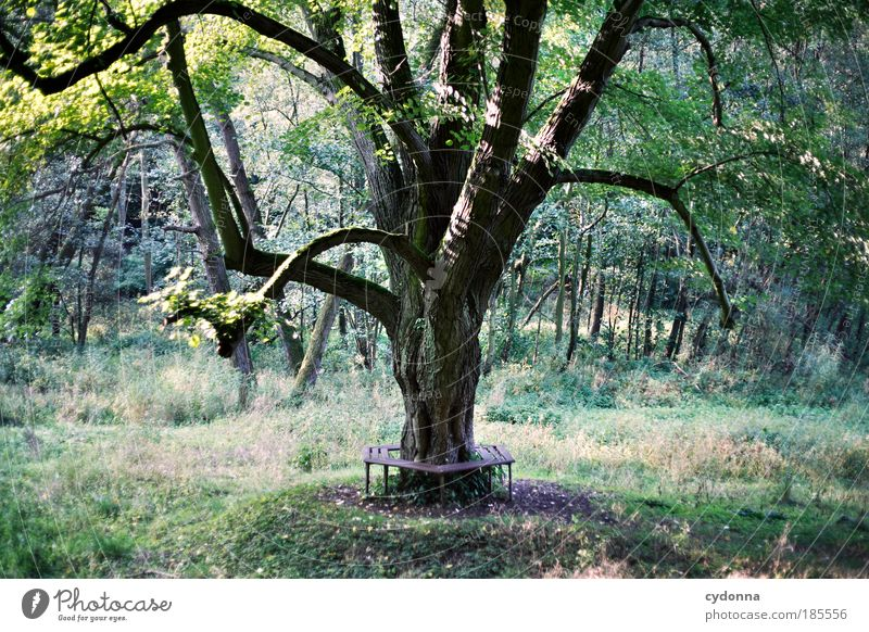 Nature Tree Calm Forest Life Relaxation Grass Freedom Dream Landscape Contentment Hiking Environment Time Trip Esthetic
