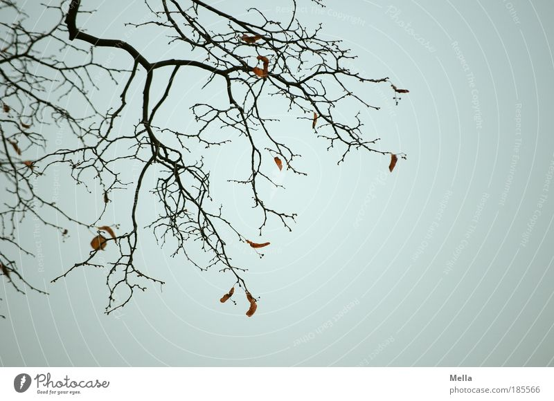 Sky Nature Plant Leaf Calm Winter Dark Environment Sadness Autumn Death Gray Time Moody Gloomy Branch