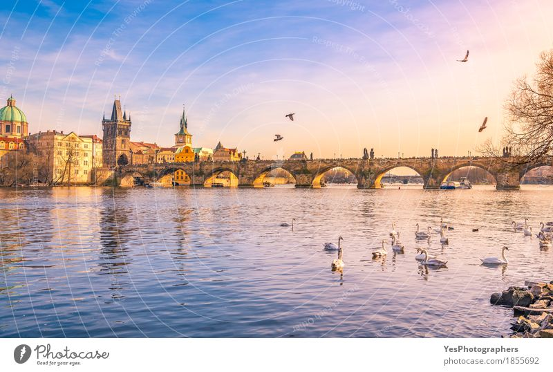 Prague city and Vltava river at sunset Nature Vacation & Travel Blue Joy Architecture Building Bird Tourism Trip Gold Europe Culture Bridge River
