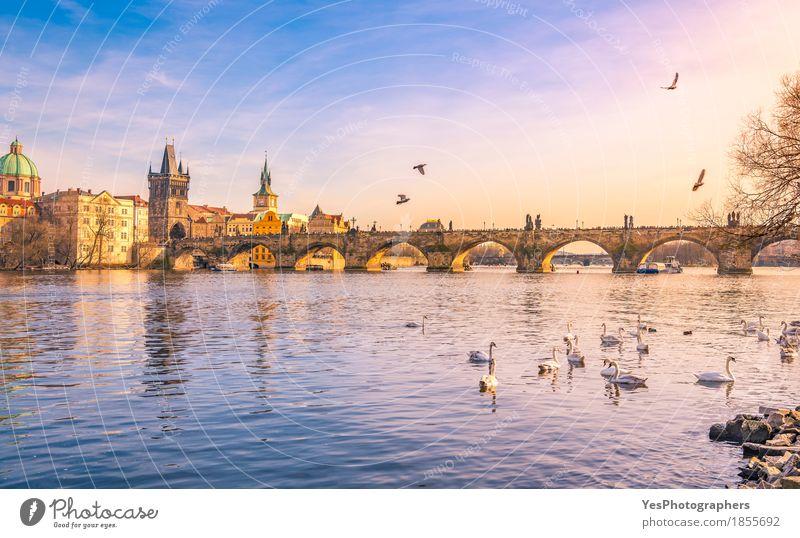 Prague city and Vltava river at sunset Nature Vacation & Travel Blue Joy Architecture Building Bird Tourism Trip Gold Europe Culture Bridge River Tourist Attraction Skyline