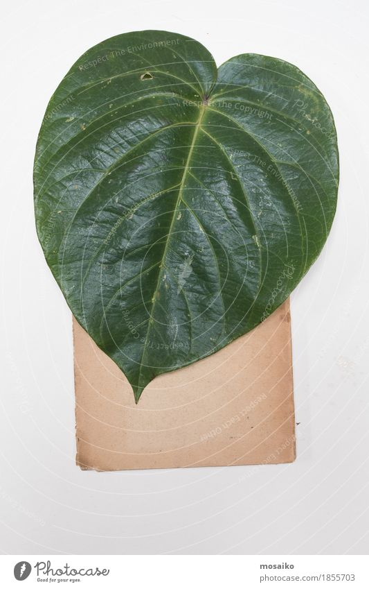 Nature Plant Green Leaf Natural Art Exceptional Brown Design Copy Space Retro Authentic Creativity Uniqueness Education Science & Research