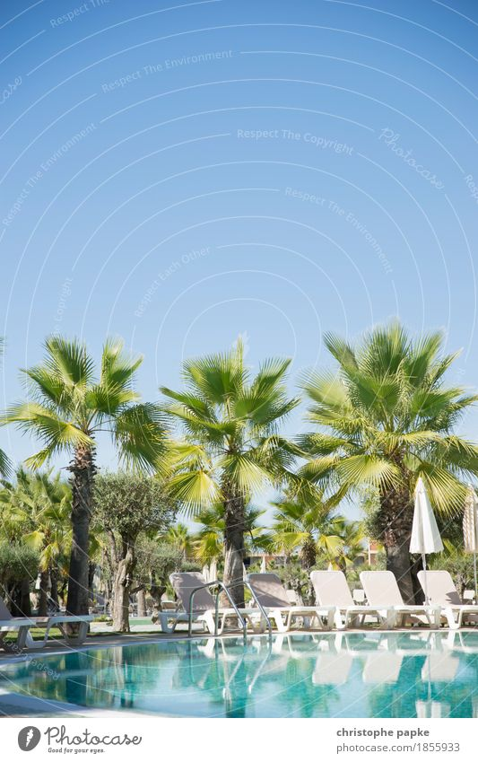 holiday paradise Well-being Contentment Relaxation Calm Swimming pool Vacation & Travel Tourism Summer Summer vacation Sun Sunbathing Plant Tree Palm tree