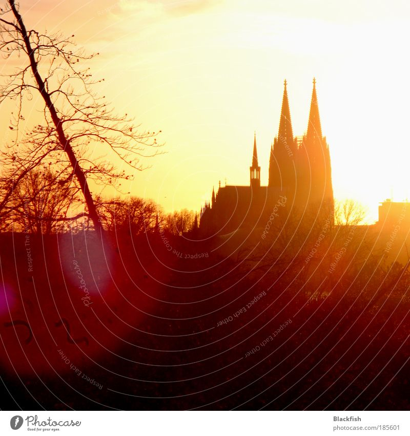 Old Yellow Autumn Brown Religion and faith Gold Sunset Church Branch Point Back-light Cologne Landmark Beautiful weather Silhouette Dome