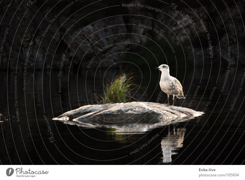 Nature Water Beautiful Loneliness Animal Relaxation Landscape Environment Grass Lake Bird Elegant Adventure Rock Island Esthetic