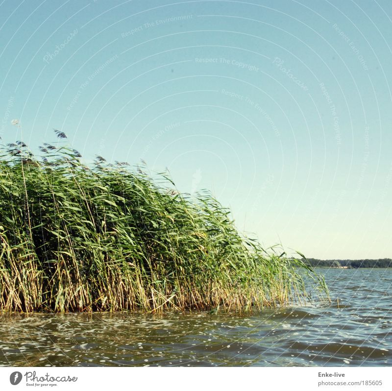 wind misalignment Nature Landscape Plant Air Water Cloudless sky Climate Grass Bushes Foliage plant Waves Coast Lakeside Relaxation Dream Exceptional Fluid