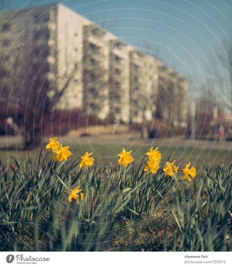Nature Old Sky Green Blue City Plant Yellow Meadow Grass Garden Happy Park Warmth Environment High-rise