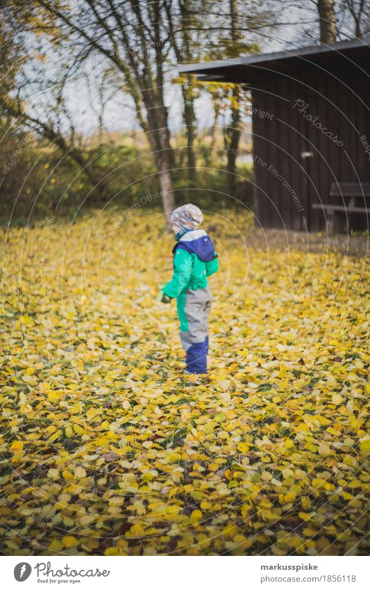 boy on autumn leave Lifestyle Well-being Leisure and hobbies Playing Vacation & Travel Hiking Garden Parenting Education Kindergarten Child Study Profession