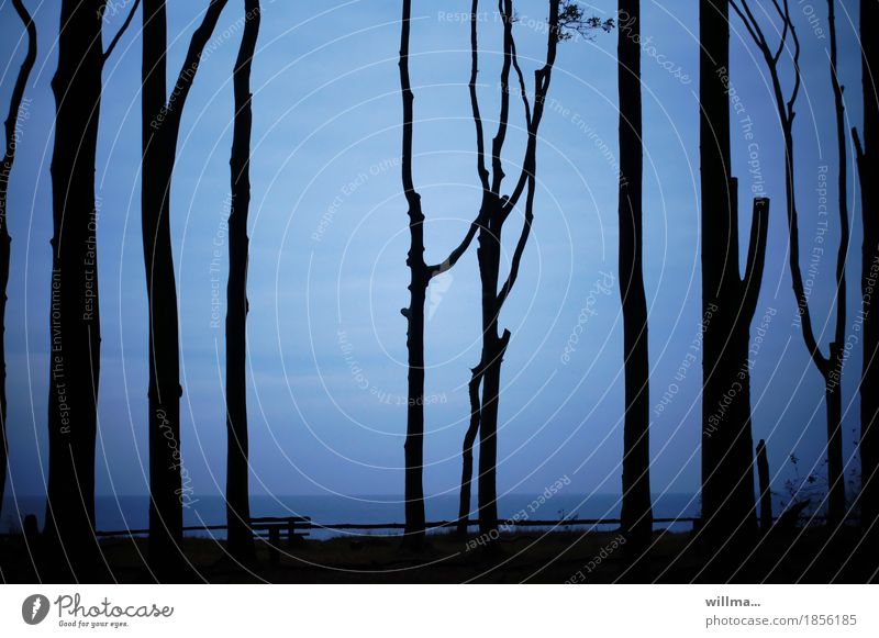 Baltic Sea coast with beech trunks from the ghost forest Silhouette Blue Black Bench Ocean Dark Evening trees Book tall Crutch Nature Landscape Graphic