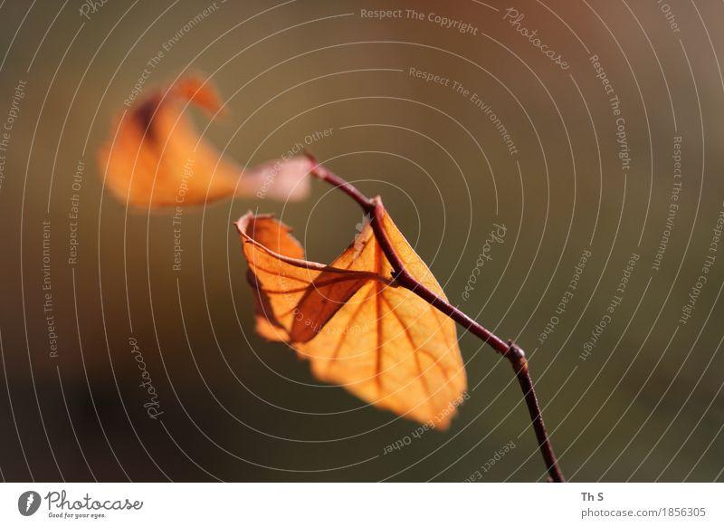 Nature Plant Beautiful Leaf Calm Winter Autumn Natural Movement Brown Orange Elegant Esthetic Authentic Uniqueness Simple