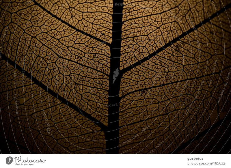 Nature Beautiful Plant Leaf Black Relaxation Autumn Style Brown Poverty Environment Esthetic Network Net Thin Branch