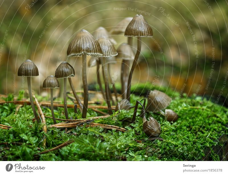 extended family Environment Nature Landscape Plant Animal Autumn Grass Moss Park Forest Growth Mushroom Mushroom cap Beatle haircut Mushroom picker