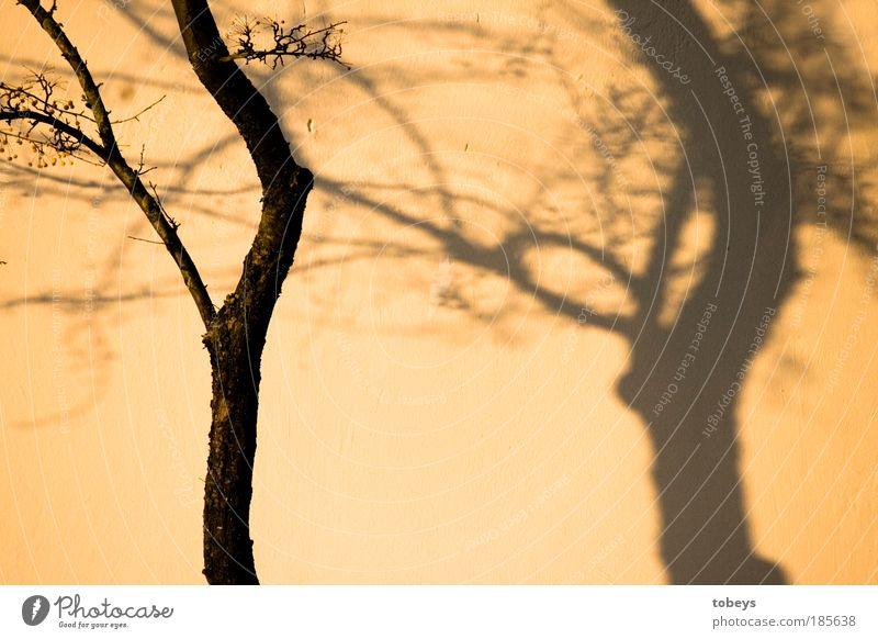 Tree Autumn Warmth Moody Bushes Change Deception