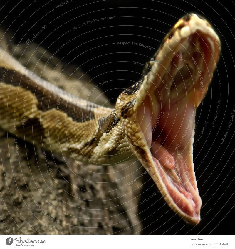 Animal Mouth Skin Dangerous Threat Near Appetite Detail Boredom Reptiles Exotic Aggression Action Human being Snake Motion blur