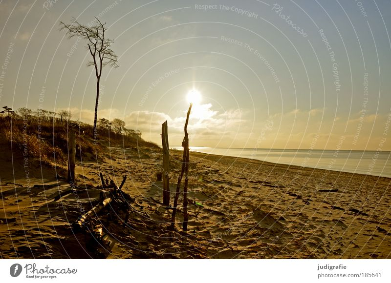 Nature Water Sky Tree Sun Ocean Beach Vacation & Travel Loneliness Relaxation Warmth Sand Landscape Moody Coast Environment