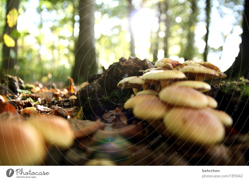 mushroom soup Environment Nature Sky Autumn Beautiful weather Plant Tree Bushes Moss Mushroom Forest Contentment Mushroom soup To go for a walk Forest walk