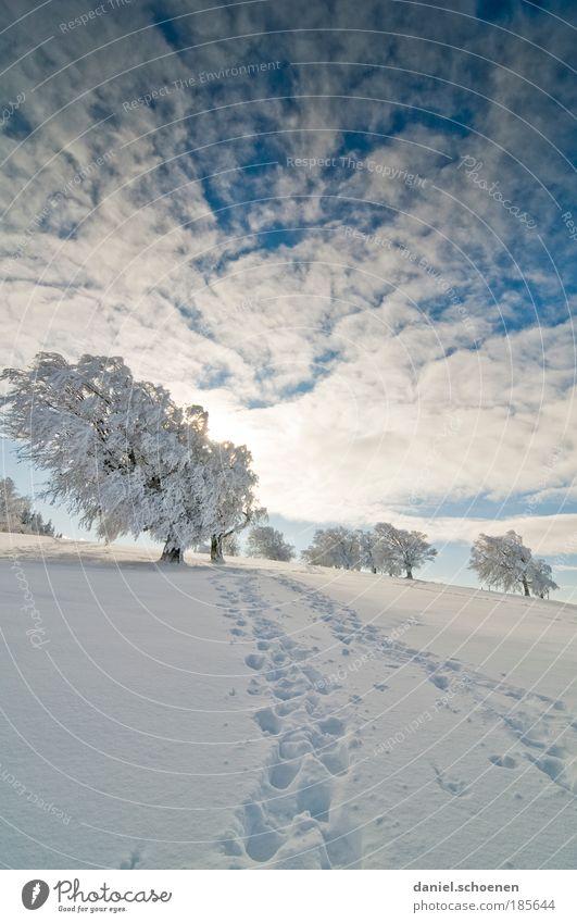 Sky White Tree Sun Blue Winter Vacation & Travel Calm Far-off places Snow Sunbeam Lanes & trails Ice Bright Hiking Horizon