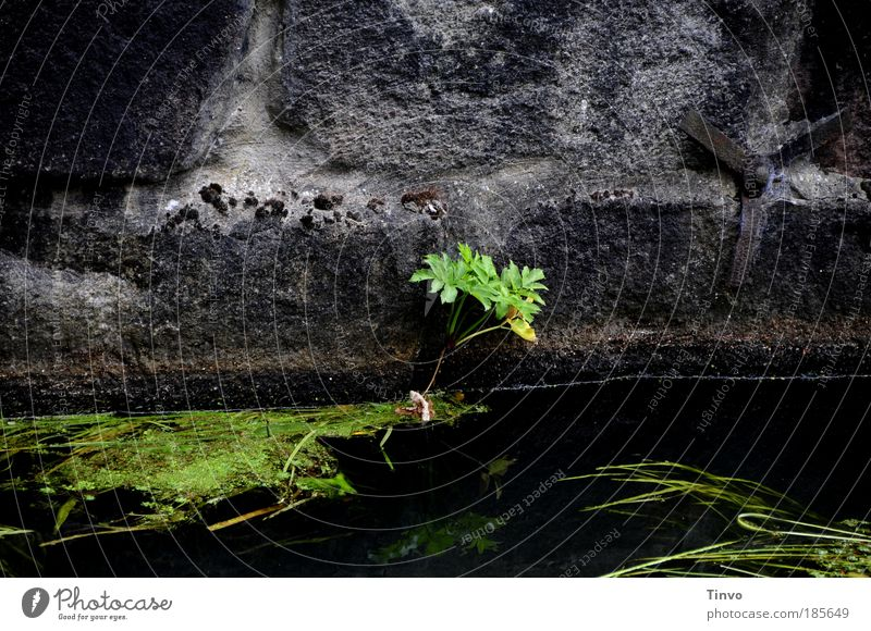 dungeon meaningless Plant Wild plant Brook River Freeze Growth Old Dark Fluid Cold Wet Under Green Black Bravery Fear of the future Apocalyptic sentiment Hope