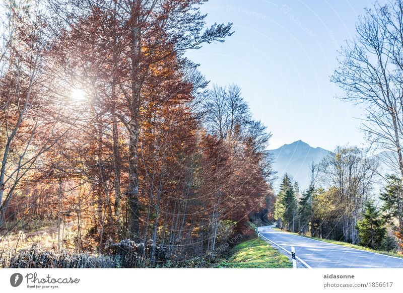 Bavaria Landscape Forest Mountain Alps Traffic infrastructure Street Contentment Romance Peaceful Autumn Colour photo Exterior shot Deserted Day Sunlight