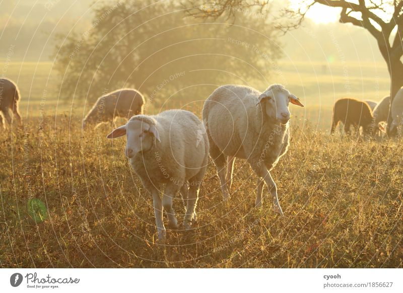 Nature Landscape Relaxation Animal Calm Far-off places Baby animal Meadow Happy Time Freedom Moody Together Contentment Idyll
