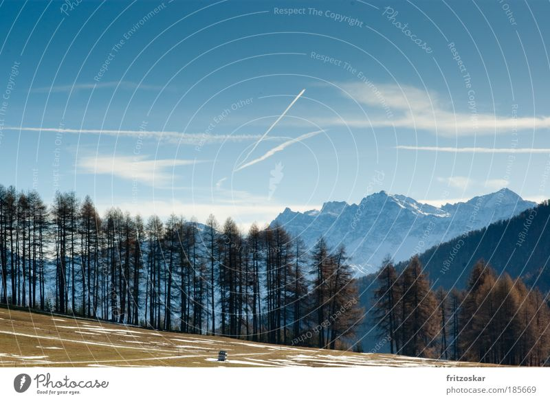 meadow/tree /mountain Far-off places Freedom Snow Mountain Sky Clouds Autumn Tree Alps Ortler Slinky South Tyrol Blue Brown Vinschgau up & down Colour photo