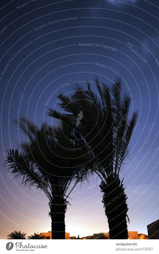 Bright horizon Palm tree Tree Horizon Dubai United Arab Emirates Night Constellation Sky smaller car Silhouette