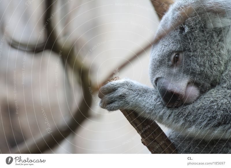 Nature Beautiful Tree Calm Animal Relaxation Gray Landscape Contentment Environment Sleep Safety Tourism Soft Animal face Protection