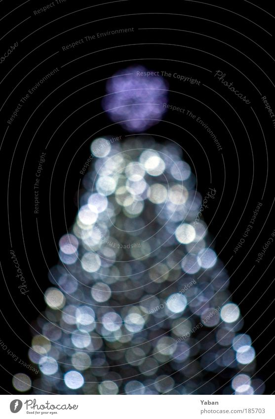 Christmas Tree - Under the Xmas tree Feasts & Celebrations Shows Decoration Candle Sign Glittering Illuminate Violet Black Silver White Christmas tree