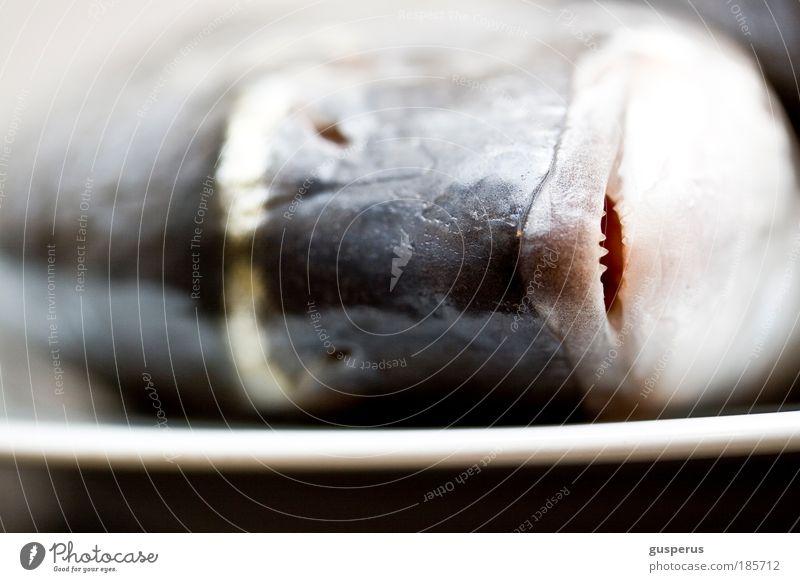 Animal Natural Food Nutrition Fish Clean Cooking & Baking Plate Macro (Extreme close-up) Crockery Fish dish Sushi Seafood Dead animal Dorade