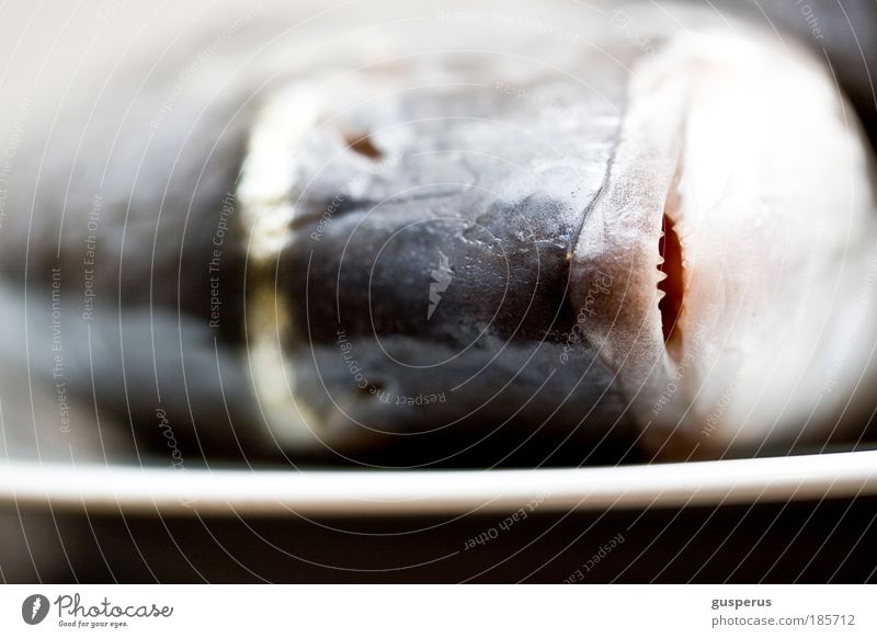 fresh fish Food Fish Seafood Dorade Nutrition Sushi Plate Dead animal 1 Animal Natural Clean Cooking Colour photo Macro (Extreme close-up)