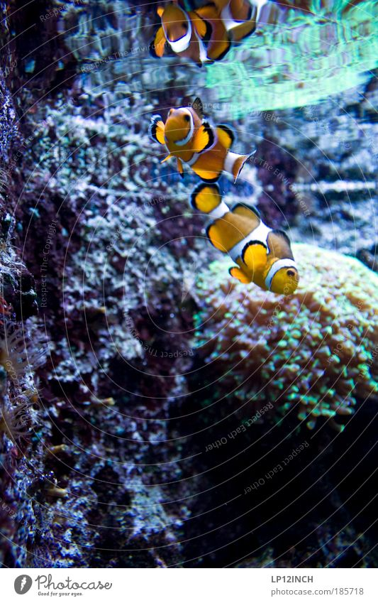 Nature Water Vacation & Travel Plant Ocean Animal Far-off places Environment Coast Pair of animals Wild animal Wet Tourism Crazy Esthetic Living or residing