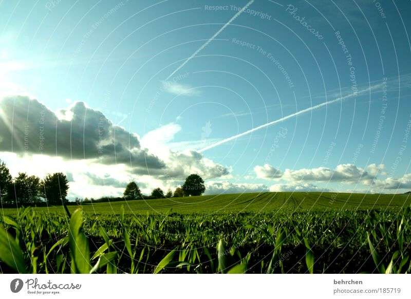 Sky Plant Green Tree Clouds Autumn Spring Meadow Grass Happy Freedom Dream Field Growth Bushes To enjoy