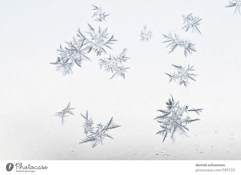 flowers Ice Frost Cold Blue White Winter Ice crystal Neutral Background Delicate Crystal structure Macro (Extreme close-up)