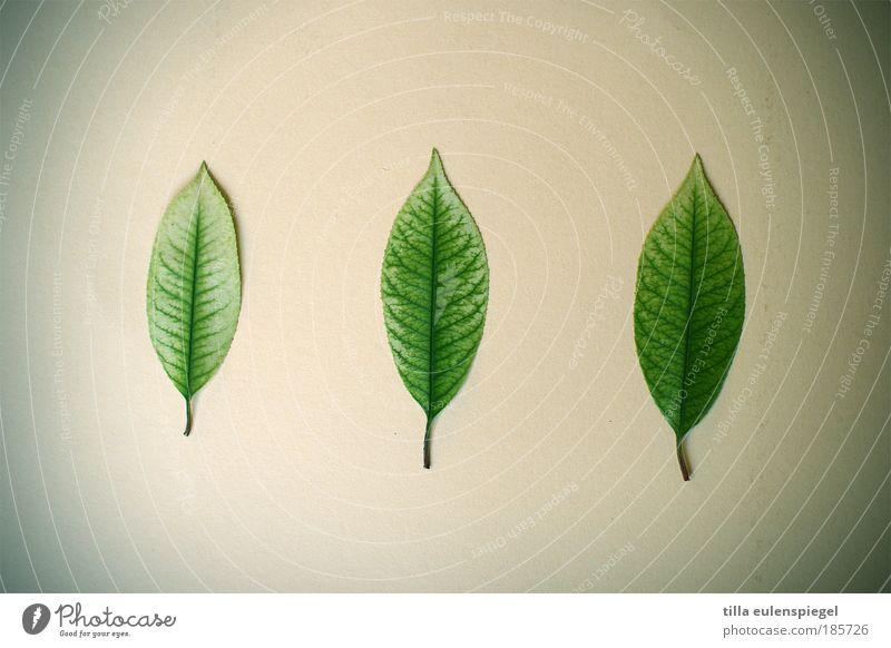 Nature Beautiful Green Leaf Autumn Environment Arrangement Esthetic Authentic Lie Uniqueness Natural Relationship Plant Classification Accumulation