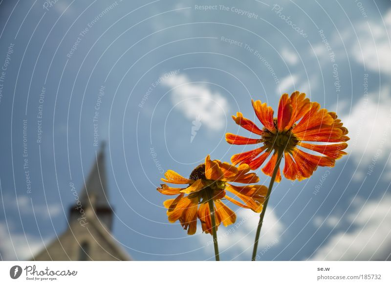 Sky Plant Blue Summer Flower Environment Warmth Blossom Happy Garden Bright Illuminate Esthetic Church Blossoming Joie de vivre (Vitality)