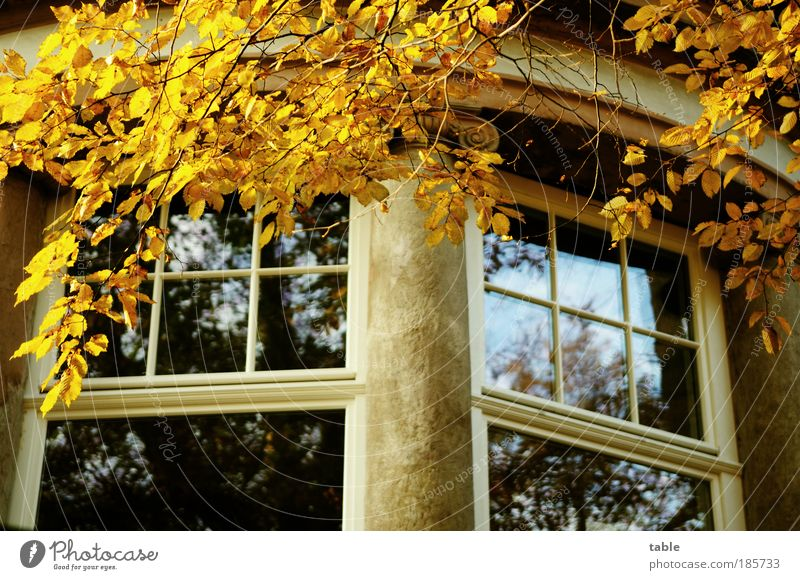 Old Tree Blue Leaf House (Residential Structure) Yellow Autumn Wall (building) Emotions Window Wood Gray Stone Wall (barrier) Building Glass