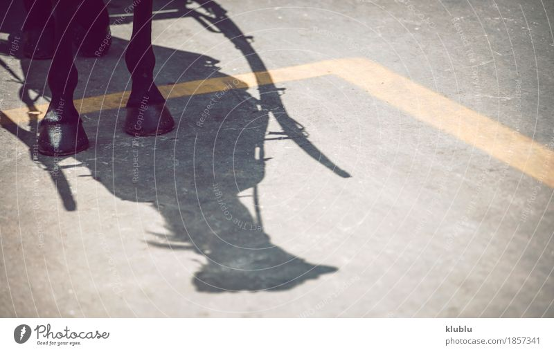 Shadow of a horse with a carriage Summer Tree Animal Brown Tourism Park Copy Space Vantage point Europe Horse Vehicle Tourist Partially visible Consistency