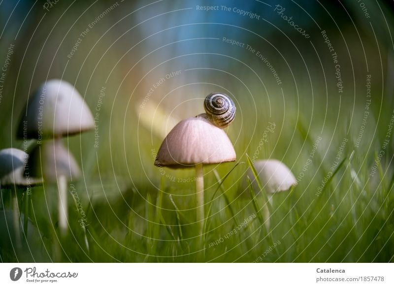 mushroom vistas Nature Plant Animal Autumn Beautiful weather Grass Mushroom Meadow Snail 1 Living or residing Esthetic Blue Brown Green Moody Success Caution