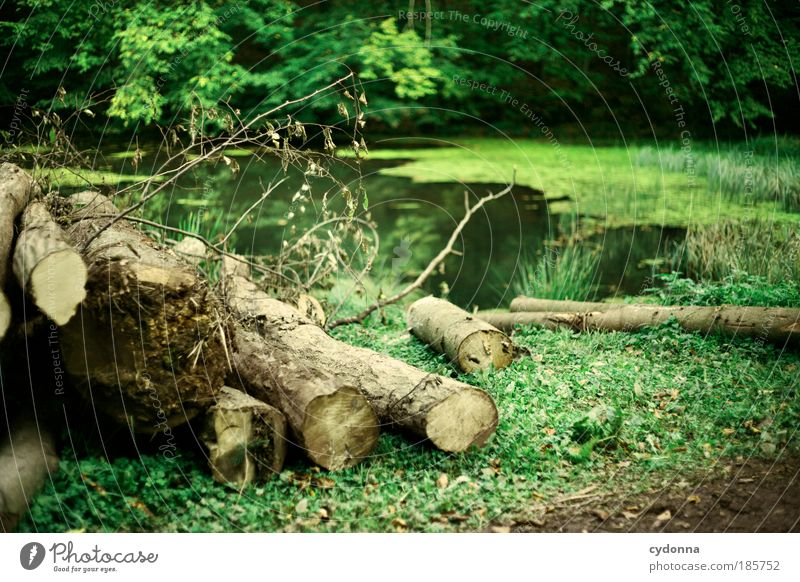 Nature Tree Green Plant Calm Forest Life Relaxation Death Grass Dream Landscape Contentment Environment Time Trip