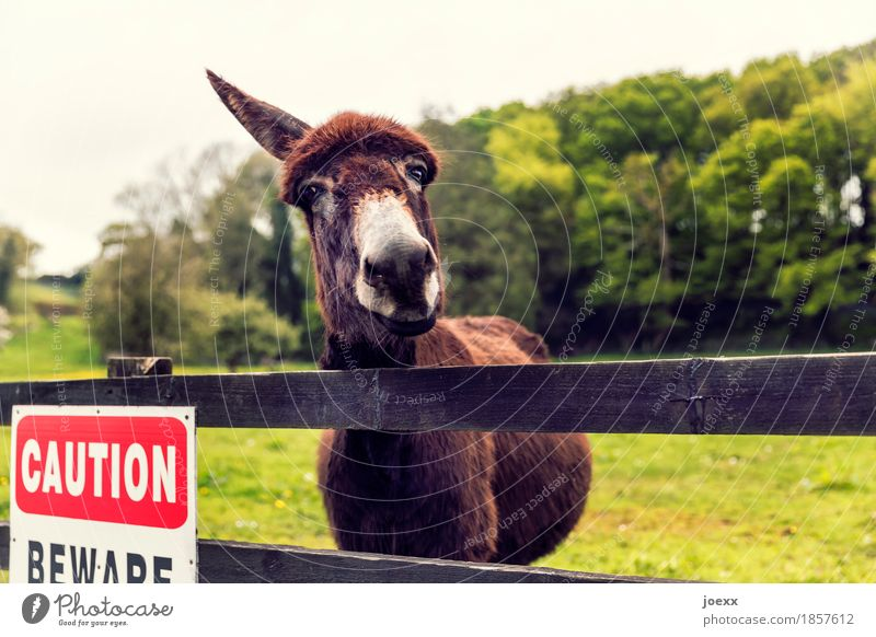 one-eared donkey Animal Farm animal Donkey 1 Curiosity Brown Green Red Sadness Hope Fence Enclosure Colour photo Exterior shot Deserted Shallow depth of field