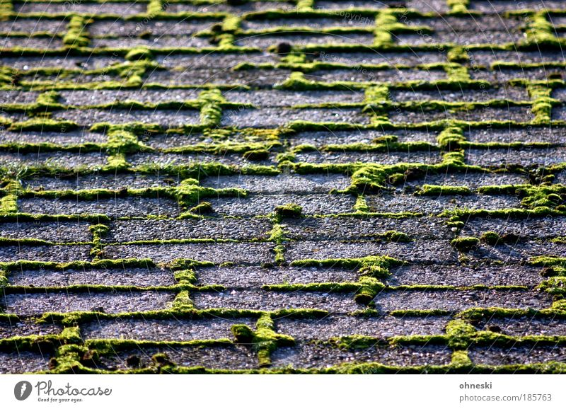 Nothing going on without moss Environment Nature Autumn Plant Moss Stone Green Weed Paving stone Colour photo Exterior shot Twilight Light Shadow Contrast