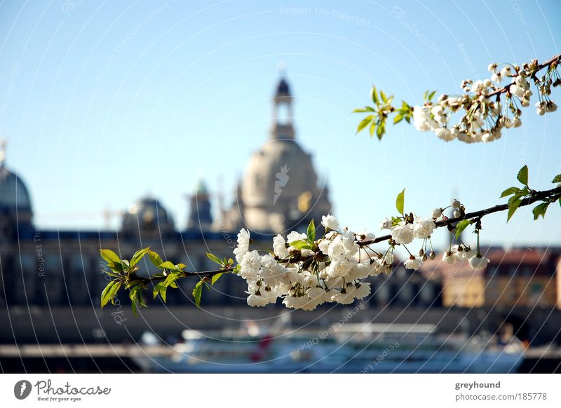 Nature Tree Dresden Blossom City Church Culture Silhouette Skyline Landmark Blur Tourist Attraction Old town Cloudless sky Frauenkirche