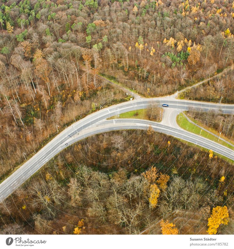Autumn from above Landscape Tree Forest Outskirts Deserted Places Tourist Attraction Transport Traffic infrastructure Passenger traffic Street Crossroads