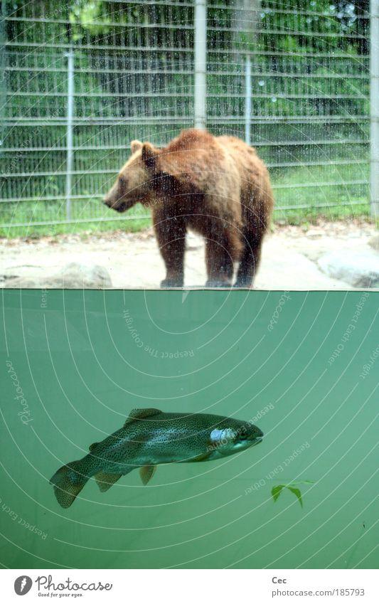 Nature Water Green Calm Leaf Animal Nutrition Switzerland Line Wait Fish Swimming & Bathing Wild Wild animal Zoo Material